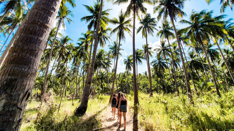Travellers walk through a palm tree grove in the Philippines